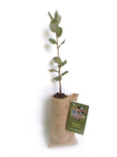 Plantar un arbol bricolaje casa - Arbolitos para jardin ...