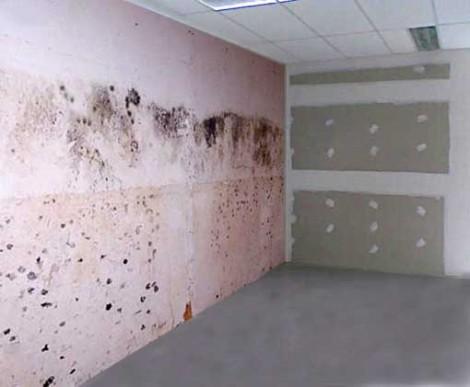 Eliminar manchas dificiles bricolaje casa - Contra la humedad ...