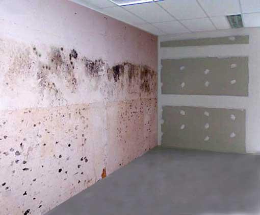 Remedios contra la humedad bricolaje casa - Humedad en la pared ...
