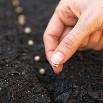 siembra por semilla