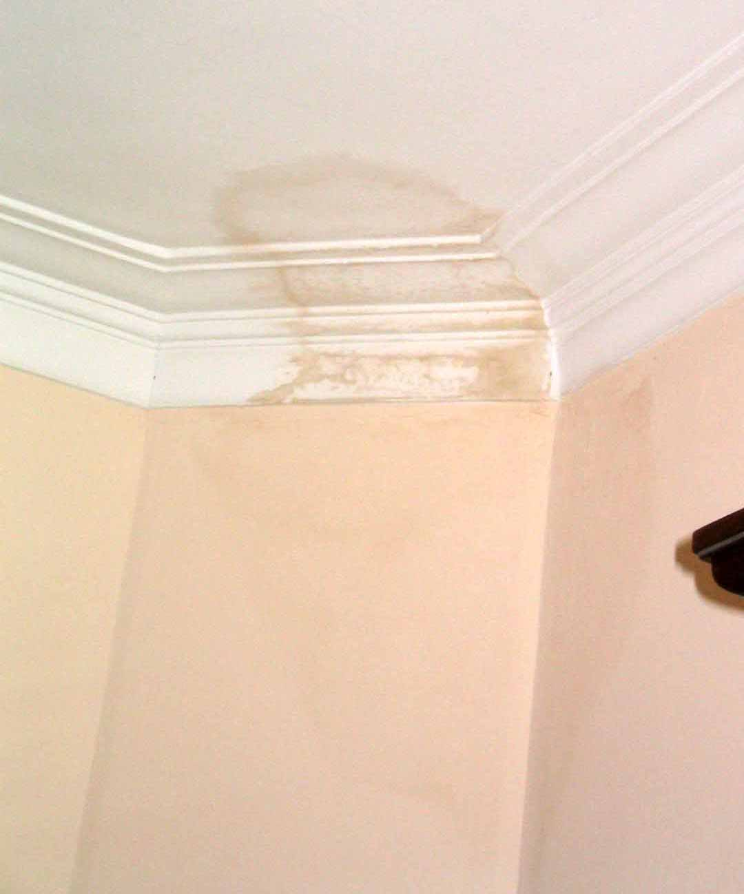 Alba ileria bricolaje casa - Aparato para la humedad ...